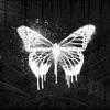 NZ Shapeshifter Monarch