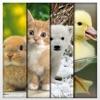 Animali Dolci HD Sfondi - Teneri Animaletti: Sfondo Gratuito