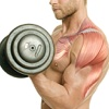 Muscle Building Workouts for Bodybuilders - Arms & Legs