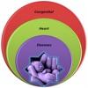 CCHD Wheel