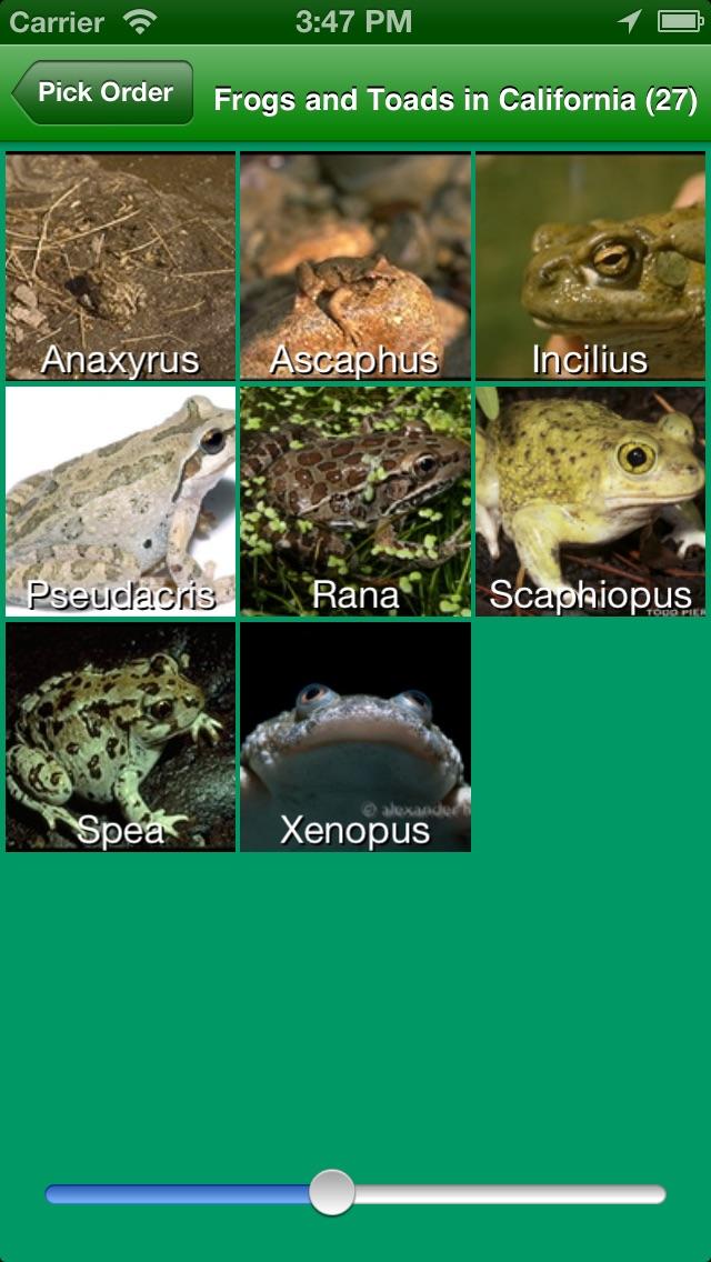 AmphibiaWeb-1