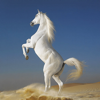 Dream Horses - Art Gallery: Breeds & Types, Racetrack & Tournaments, Photos & Paintings