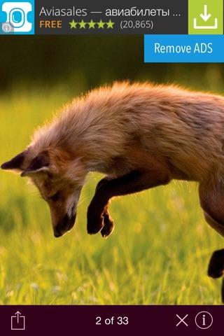 Wild animals wallpaper screenshot 2