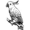 Parrots Sticker Pack