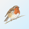 eGuide to British Birds