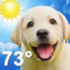 Weather Puppy