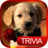 Dog Breed Quiz - Guessing Trivia For Animal Lover pop quiz