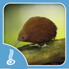 Kiwa Digital Limited - He Kīrehe Māori / Native Animals artwork