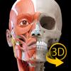 Músculos | Esqueleto - 3D Atlas de Anatomía