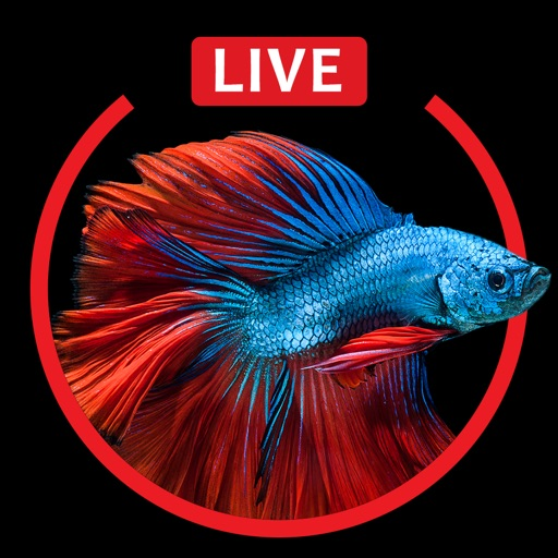 Aquarium Live HD Wallpapers For Iphone 6s Plus