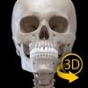 Scheletro - Atlante di Anatomia in 3D