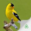 Espécies de Aves