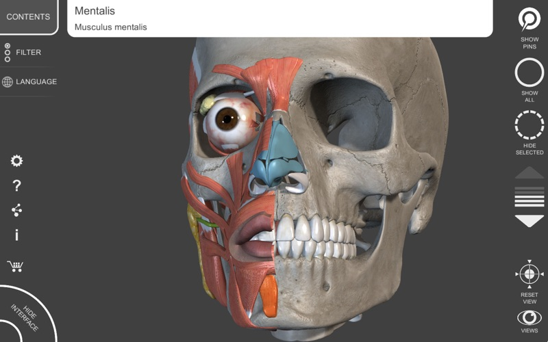 Muscle Skeleton 3d Atlas Of Anatomy App For Macs Download For