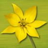 Wildblumen Finder Schweiz – Natur Blumen bestimmen