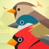 PRO Birds Complaints Wiki
