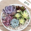 Succulent Album Pro - Help You Know Succulents