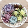 Succulent Album - Help You Know Succulents
