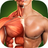 Human Anatomy 3D - Bones And Muscles