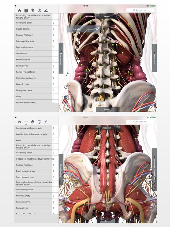 Magnífico Manera Fácil De Aprender La Anatomía Cresta - Anatomía de ...