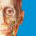 Atlas der menschlichen Anatomie Edition 2017 - Visible Body