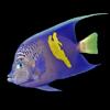 Oman Fish ID