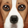 download Ultimate Dog Simulator