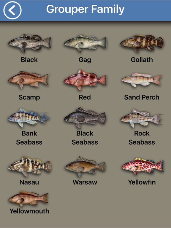 Fish the gulf app insight download for Gulf fish species