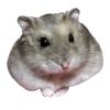 義則 高橋 - hamster01  artwork