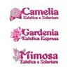 Camelia&Mimosa&Gardenia