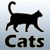 Guide e razze del gatto