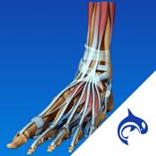 Foot Decide app review