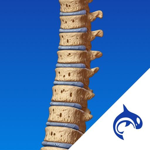 脊柱病理:SpineDecide