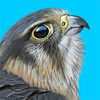 iBird UK Pro Guide to Birds