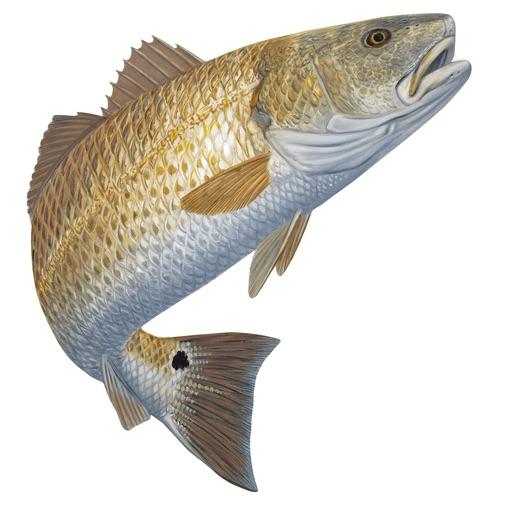 Tides for fishing par progress technologies inc for Tide for fishing
