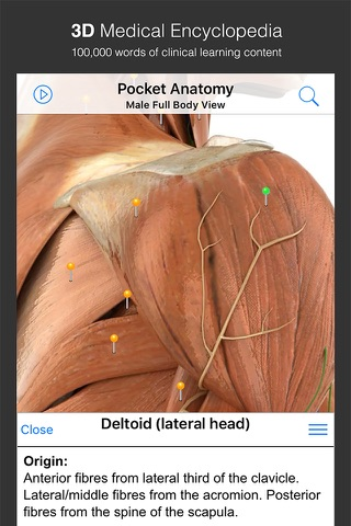 Pocket Anatomy. screenshot 3