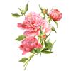 Watercolor Flower Bouquets Sticker Pack Wiki