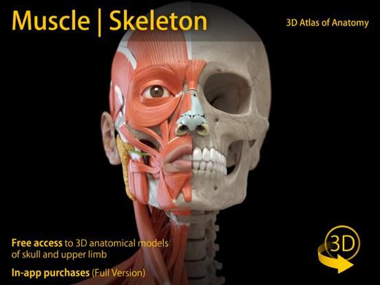 Muscle | Skeleton - 3D Atlas of Anatomy Av Catfish Animation Studio ...