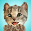 Little Kitten - My Favorite Cat Wiki