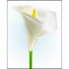Lilies Sticker Pack