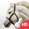 FREE Horse Catalog | Best Horse Breeds Collections