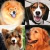 Hunde - Foto-Quiz über alle beliebten Hunderassen