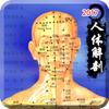 3d人体解剖生理学-人体医学肌肉解剖图谱 Wiki