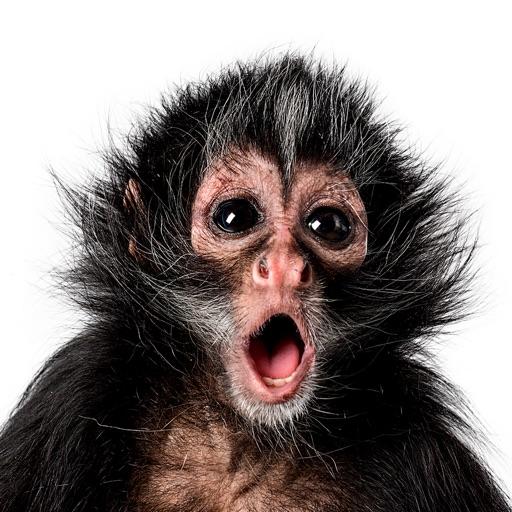 Weird Monkey Pictures 8