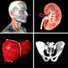 Anatomy Quiz Pro - Real Bodywork