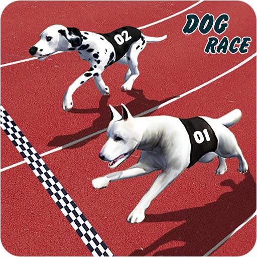 Crazy Greyhound Dog Racing