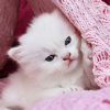 Cute Kitty & Cats Wallpapers & Backgrounds Gallery