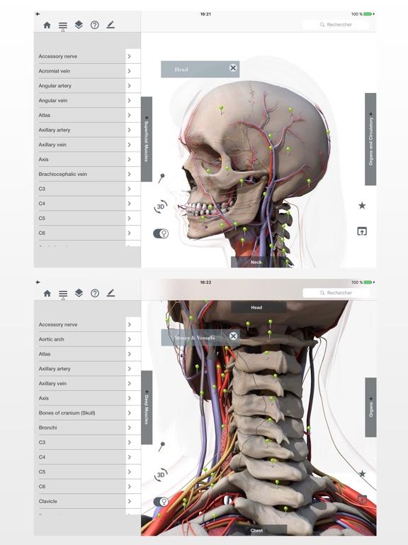 Bonito Cómo Aprender Fácilmente La Anatomía Viñeta - Anatomía de Las ...