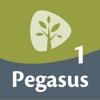 Pegasus 1 woordentrainer Latijn