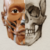 アーティストのための3D解剖学的構造 | バージョン 1.2