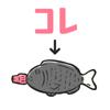 KYOUKO HAMADA - コレの名前は?㊙あなたの雑学力が今試される!  artwork